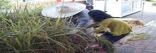 [태랑초] 모내기부터 추수까지 농작물의 소중함 일깨워